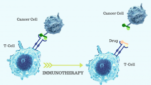 Immunotherapy Found Most Effective in Men